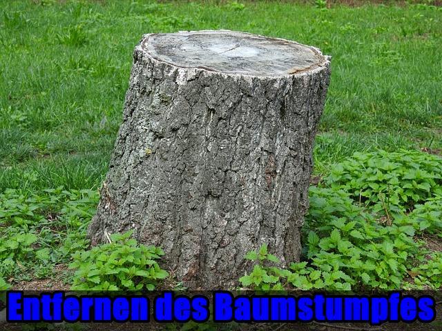 Entfernen des Baumstumpfes